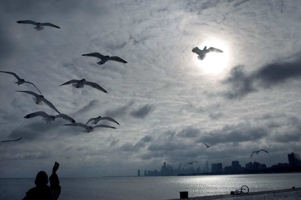 seagull-lake