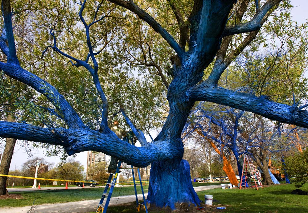 painted tree along lake shore drive in chicago